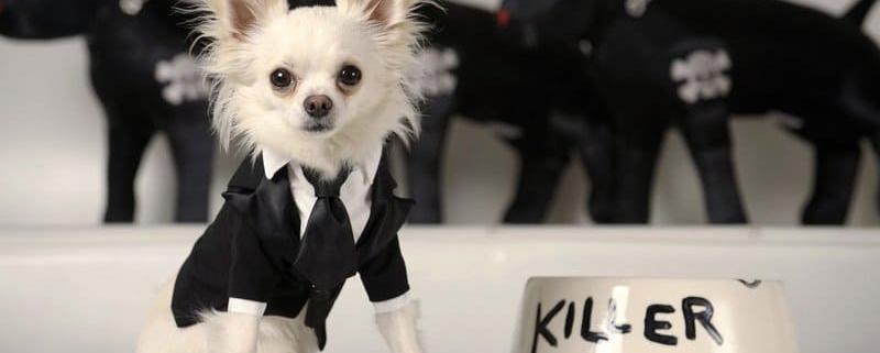 модная одежда для собак 2020