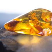янтарь - особенности камня